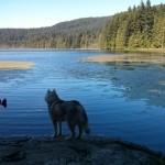 Dog Friendly Day Trip to Bowen Island