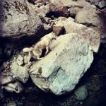 Wordless Wednesday: Mountain Husky