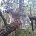 Dog Friendly Hiking in Squamish: The Four Lakes Trail.