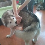 Healthy Stretches for Your Dog: Side Stretches