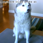 Perfecting Your Dog's Sit Stay with Vimtag Camera