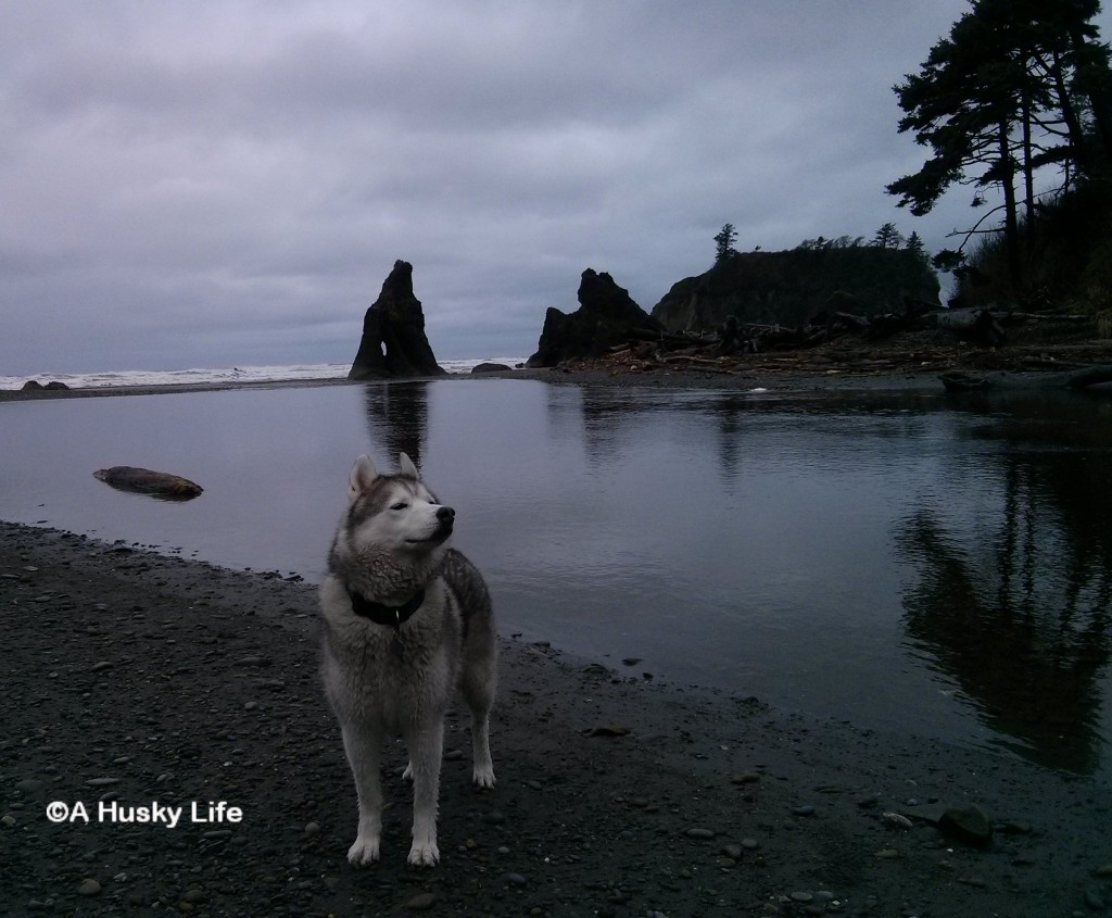 Rocco smelling the air at Ruby Beach.