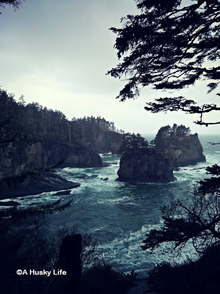 View point on the trail to Cape Flattery.