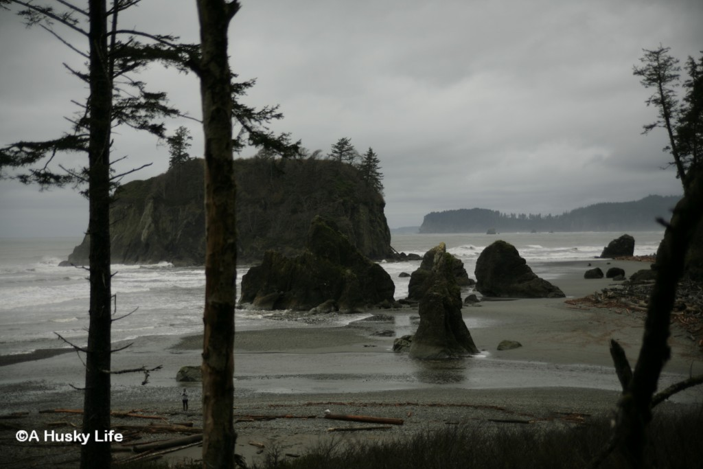 View of Ruby Beach on the West Coast of Olympic Peninsula