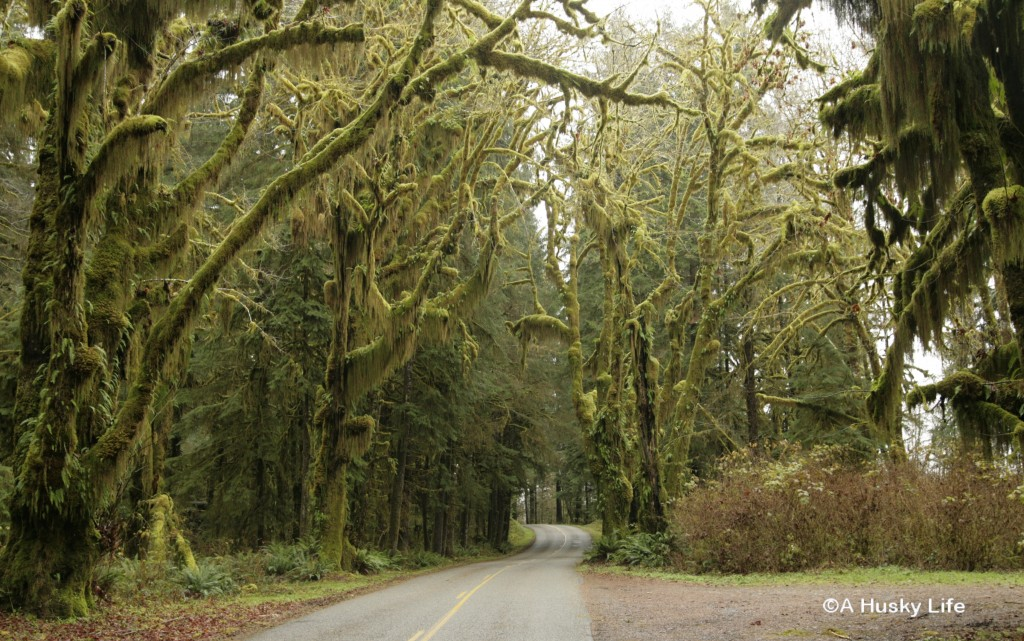 Road to Hoh National Rainforest.