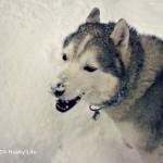 Wordless Wednesday: Snow-Nose