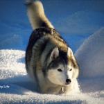 Wordless Wednesday: Dashing Through the Snow