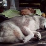 Wordless Wednesday: Synchronized Snoozing