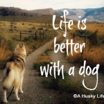 Wordless Wednesday: Life is Better with a Dog