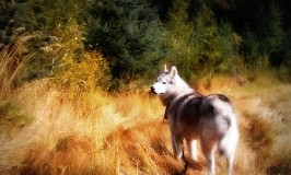 Dog Friendly Hiking: Campbell Valley Regional Park