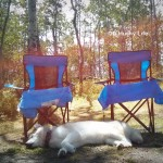 Wordless Wednesday: Camping
