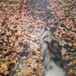 Wordless Wednesday: It's Raining Leaves