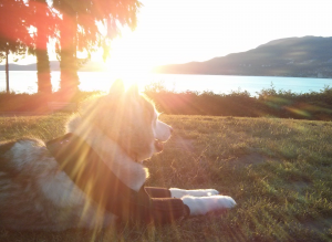 12 Things I've Learned While Rehabbing My Dog