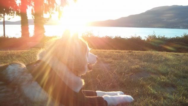 Things I've Learned Rehabbing My Dog