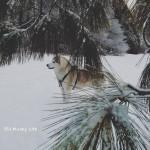 Wordless Wednesday: Winter