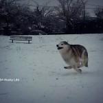 Wordless Wednesday: Snow Day