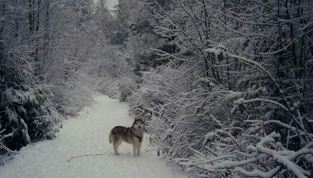 Wordless Wednesday: Winter Wonderland