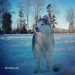 Wordless Wednesday: Snow Dog