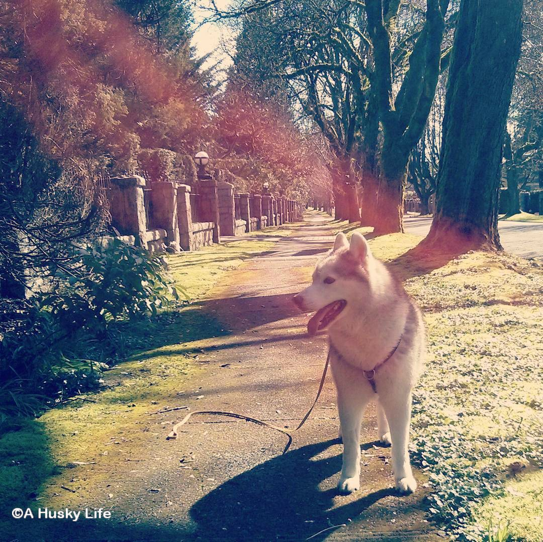 Rocco standing on the sidewalk in a ray of sun.