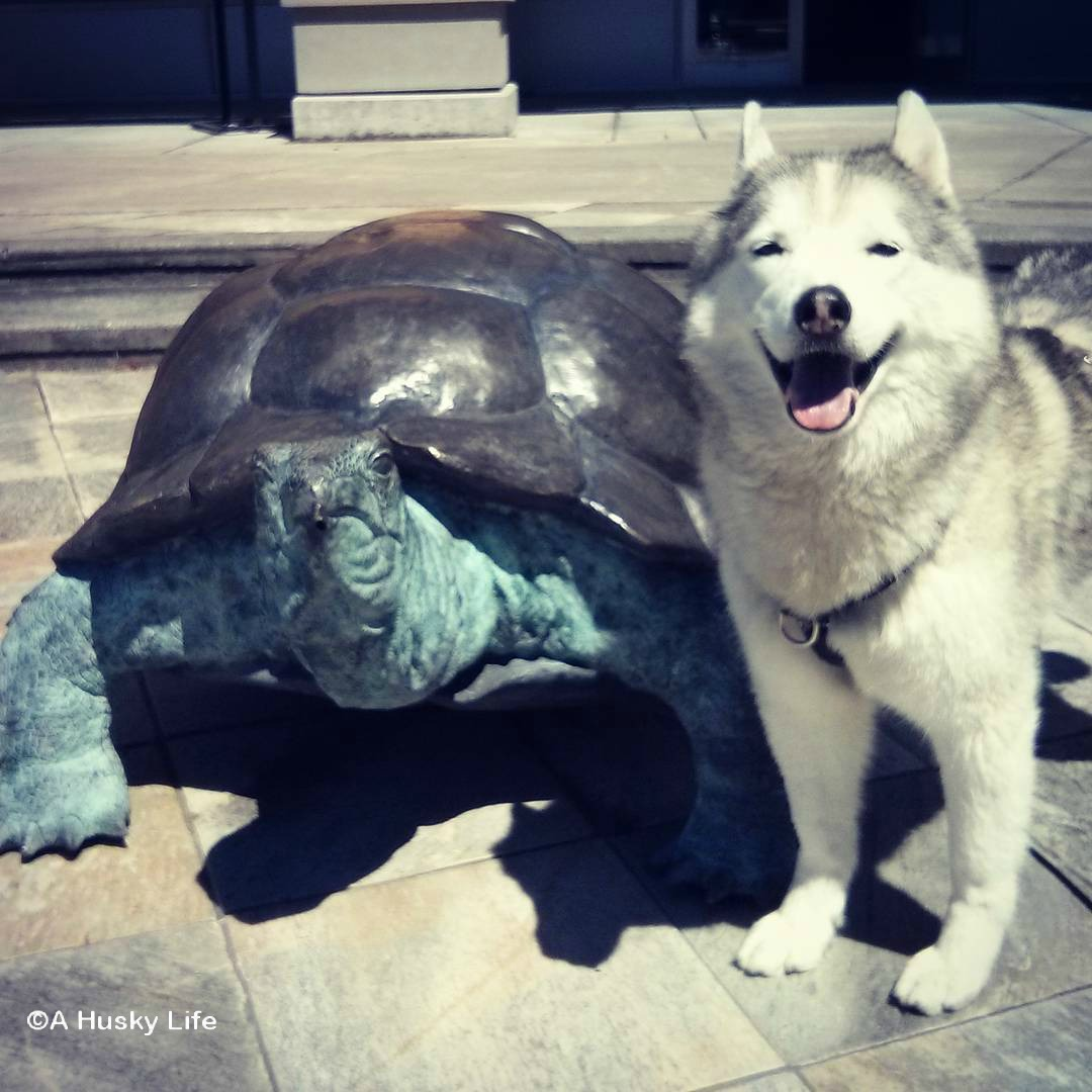 Rocco standing beside a statue of a turtle
