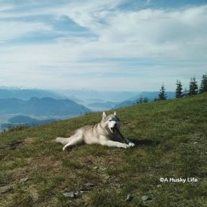 Wordless Wednesday: Stick with a View