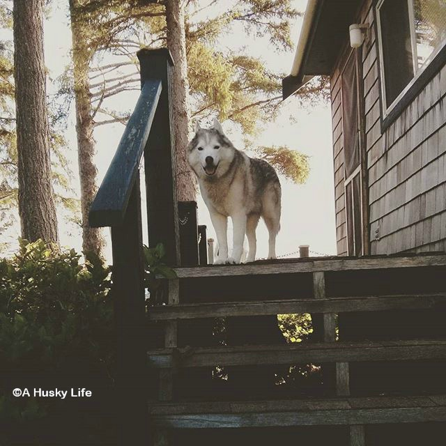 Rocco standing on wooden steps to a cottage with forest in the background.