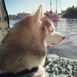 Wordless Wednesday: Sailor Dog