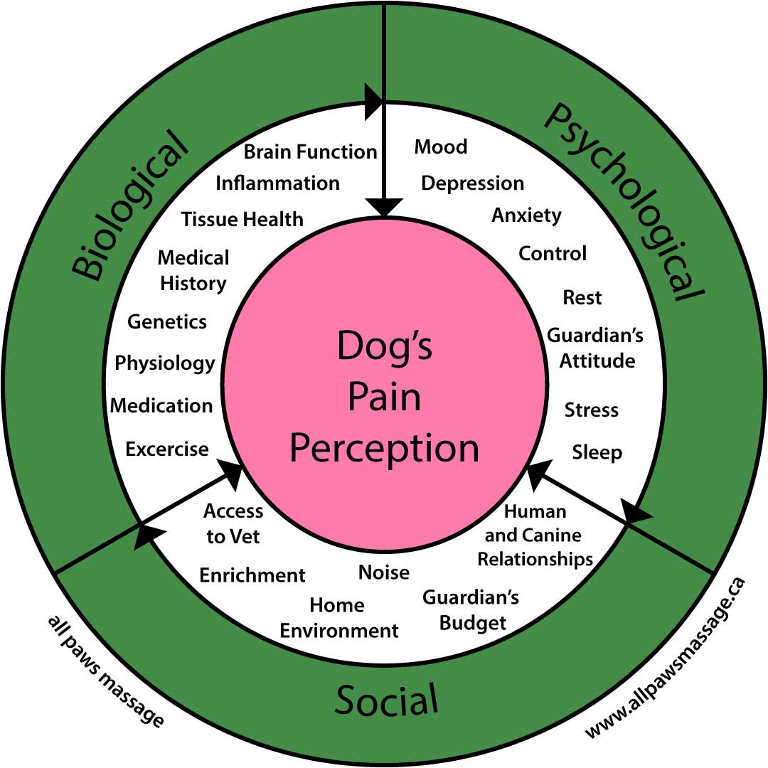How Do Dogs Perceive Pain: Biopsychosocial Model of Pain in Dogs