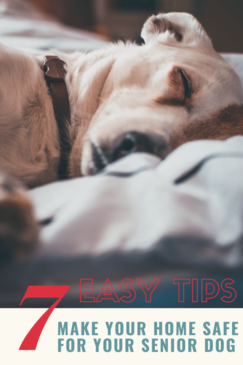 7 easy tips to make your home safe for your senior dog