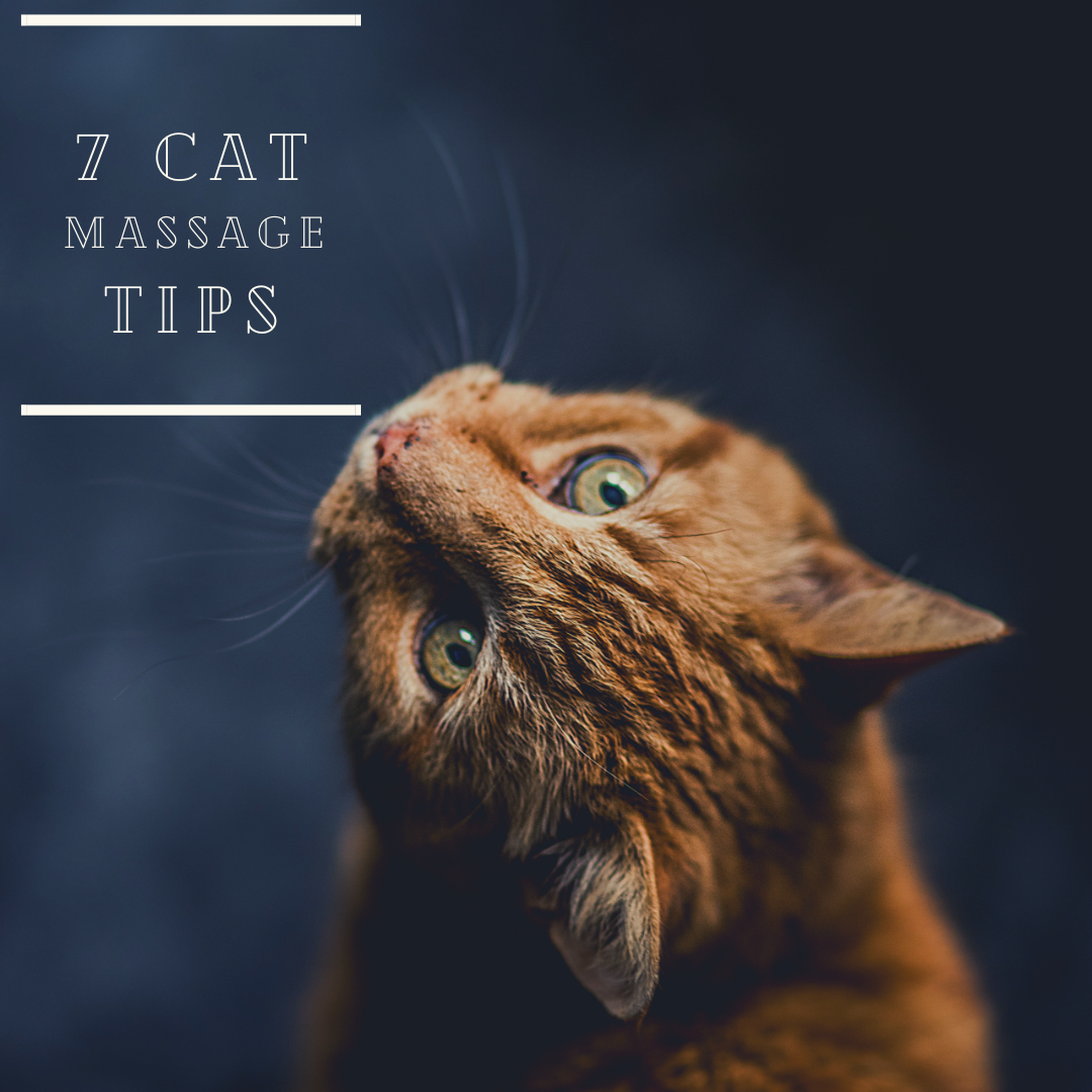 7 Cat Massage Tips