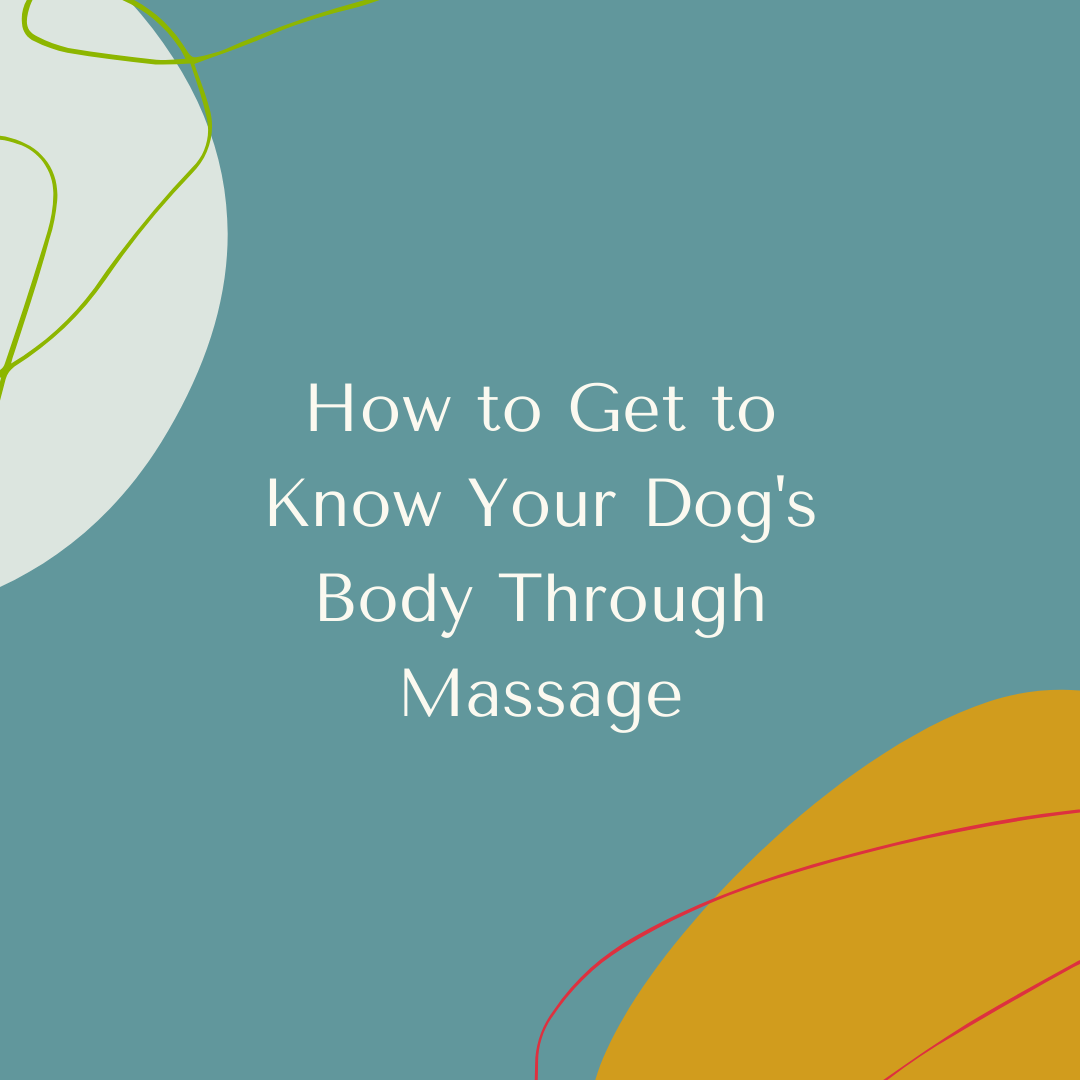 How to Get to Know Your Dog's Body Through Massage