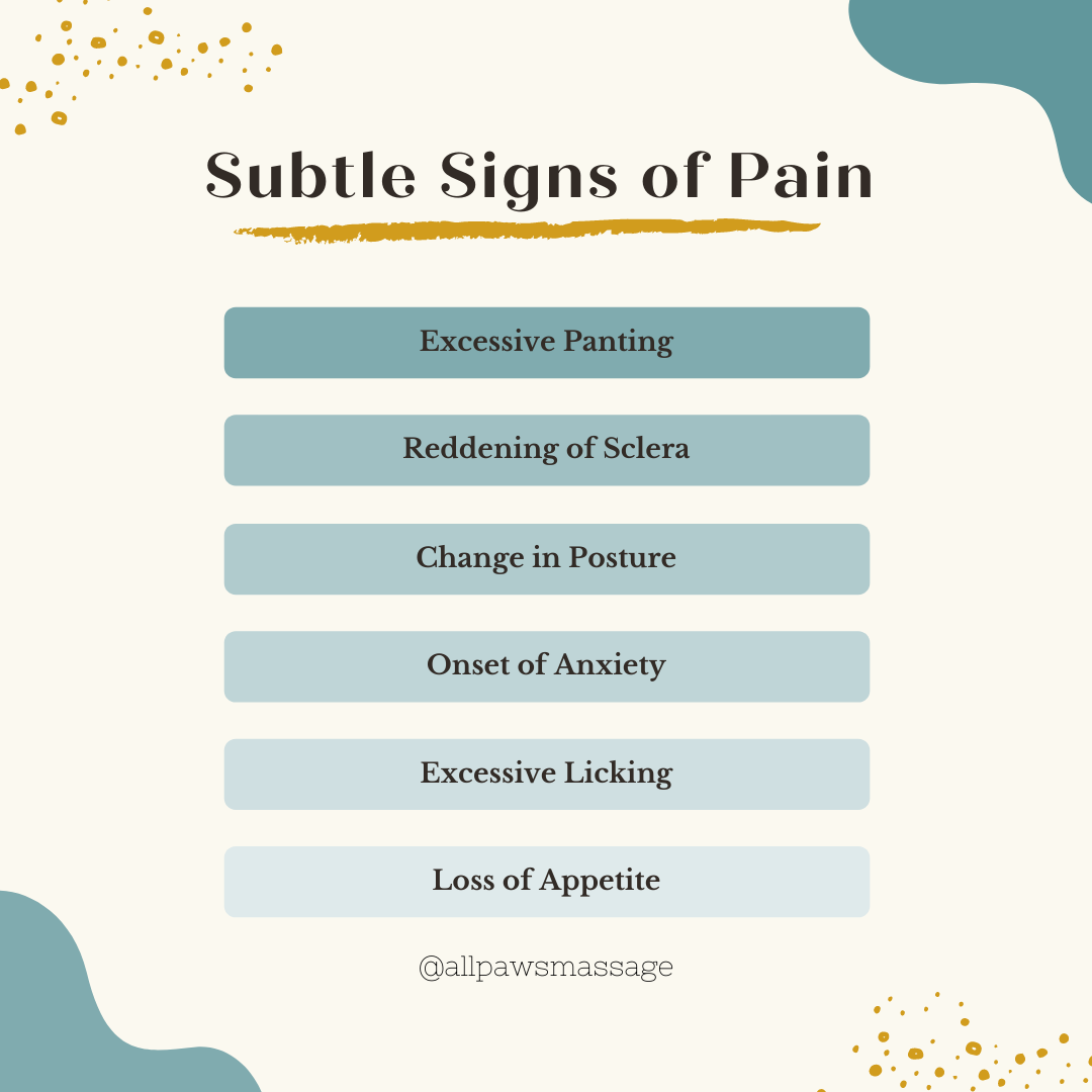 Subtle Signs of Pain in Dogs